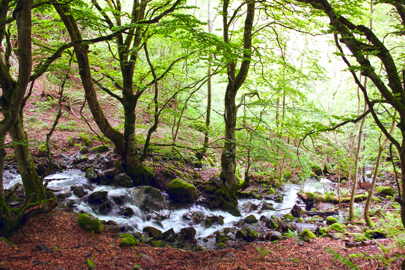 Ruta pel bosc de Carlac, a la vall d'Aran
